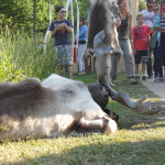 Elander_safari_andre